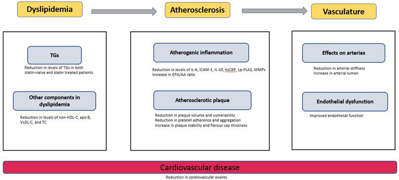 Figure 1: Mechanisms of cardiovascular risk reduction with eicosapentaenoic acid.