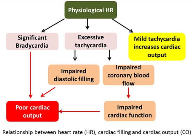 Relationship between heart rate (HR), cardiac filling, and cardiac output (CO).