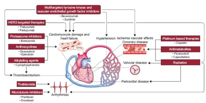 Cardiovascular Toxicities of Cancer Therapies